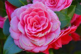 Jesensko i zimsko cvijeće