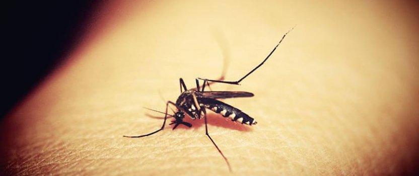 Prirodni načini za odbijanje komaraca