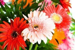 Sobne biljke za bolji san