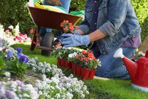 Uredite svoj vrt