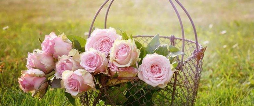 Uzgoj ruže