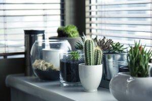 Uzgoj sobne biljke